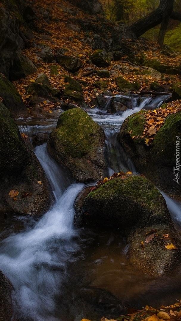 Skały w leśnym potoku