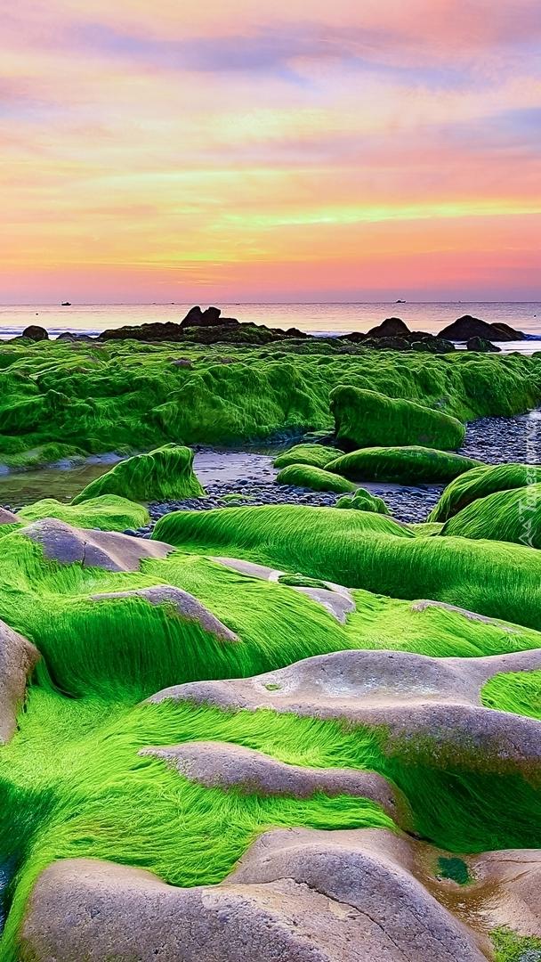 Skały w wodorostach na plaży Nam O Beach
