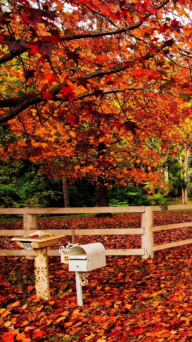 Skrzynka na listy pod jesiennym drzewem