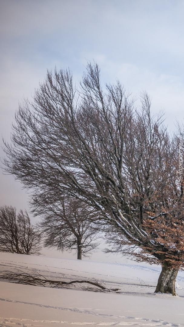 Ślady w śniegu pod drzewami