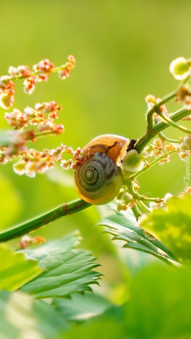 Ślimak na gałązce rośliny