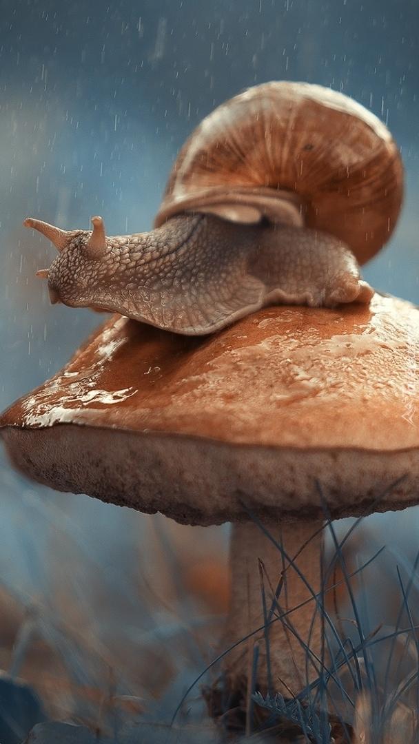 Ślimak na grzybie
