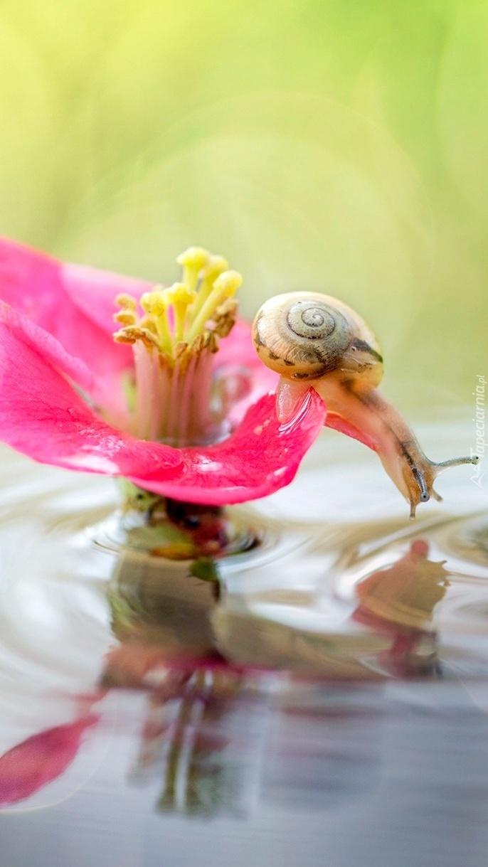 Ślimak na kwiatku nad wodą
