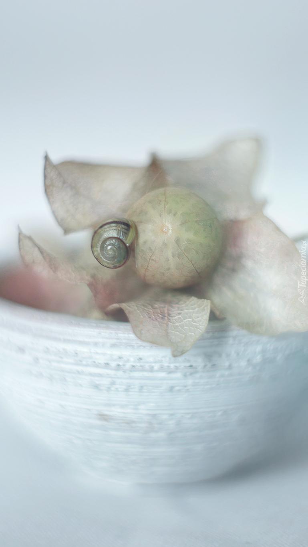 Ślimak na suchej roślinie