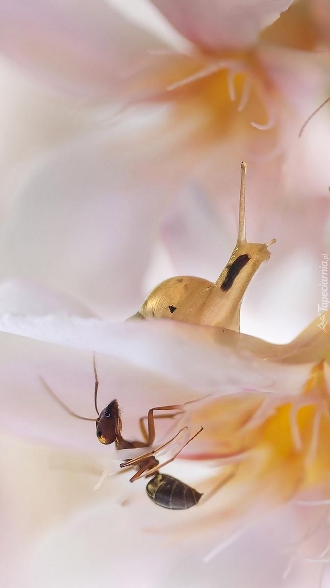 Ślimak z mrówką na kwiatku