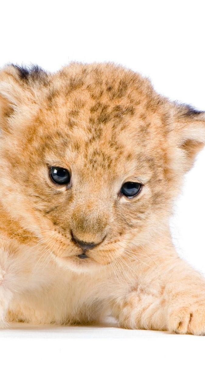 Słodkie lwiątko
