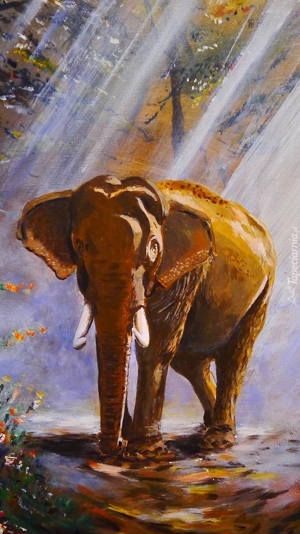 Słoń na drodze w lesie