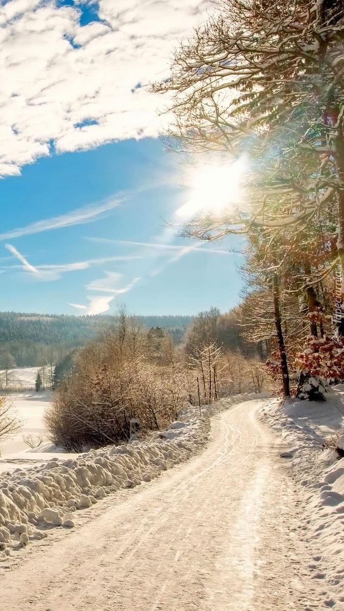 Słońce i drzewa nad zaśnieżoną drogą
