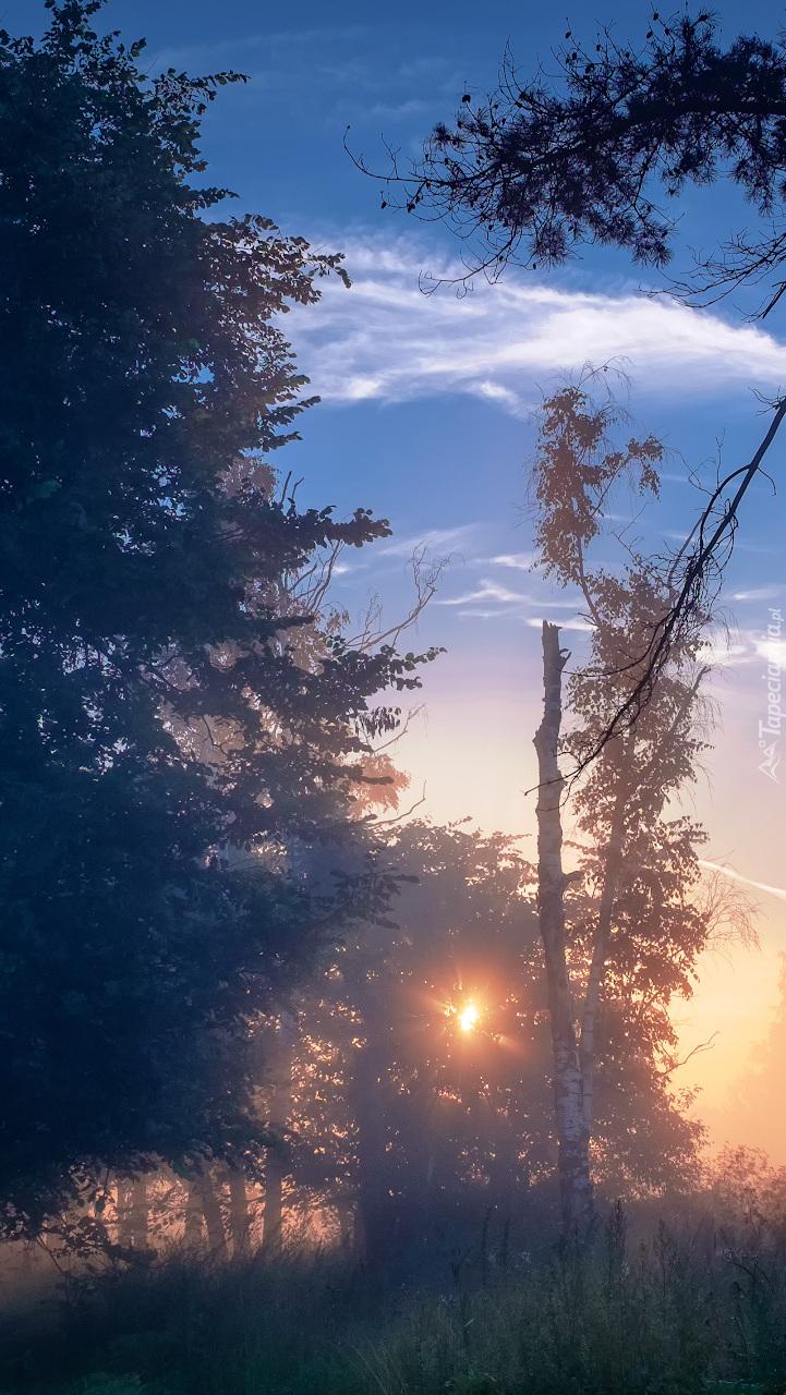 Słońce przebijające się zza drzew