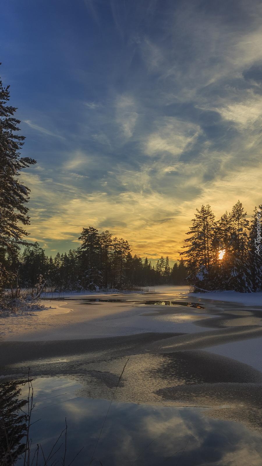Słońce ukryte za drzewami