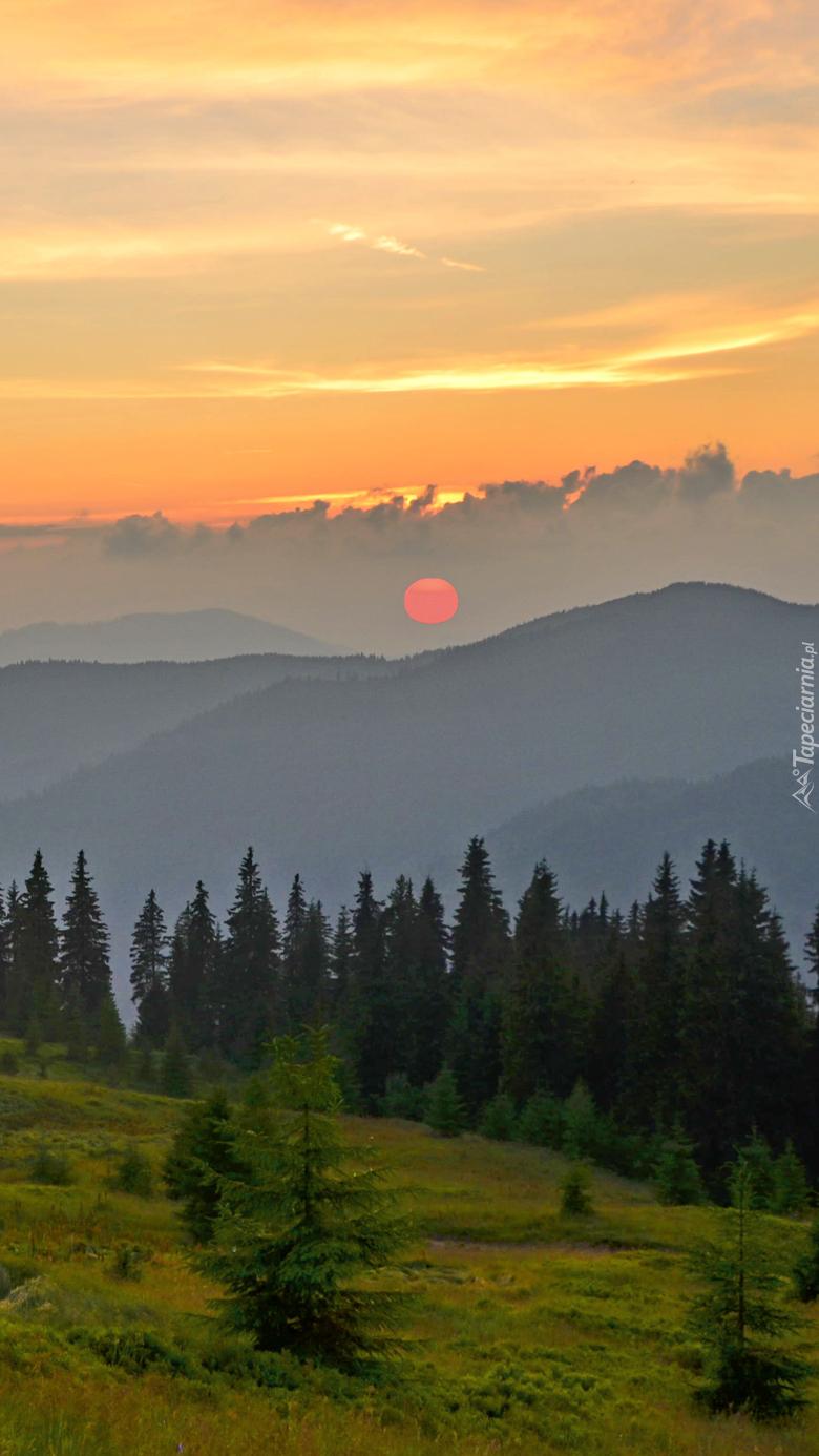 Słońce w chmurach nad zamglonym lasem