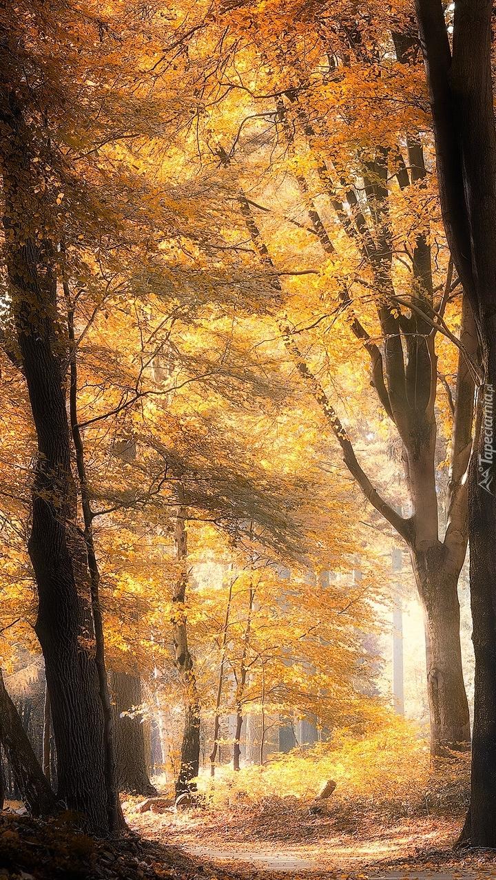 Słońce w jesiennym lesie
