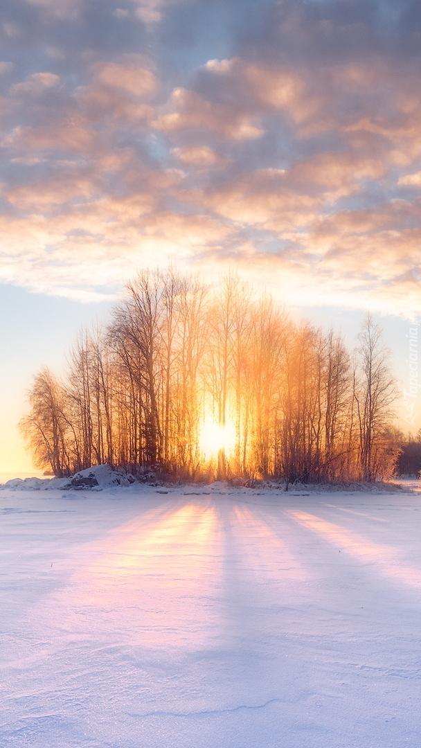 Słońce wśród drzew na zaśnieżonym polu