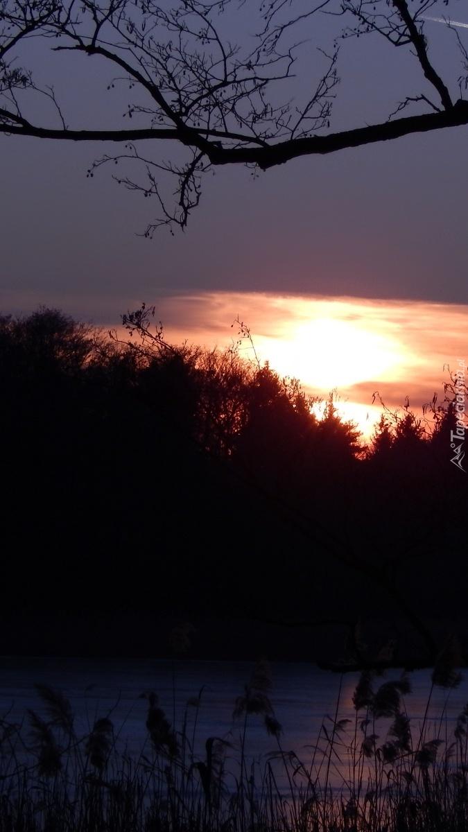Słońce zachodzi nad lasem