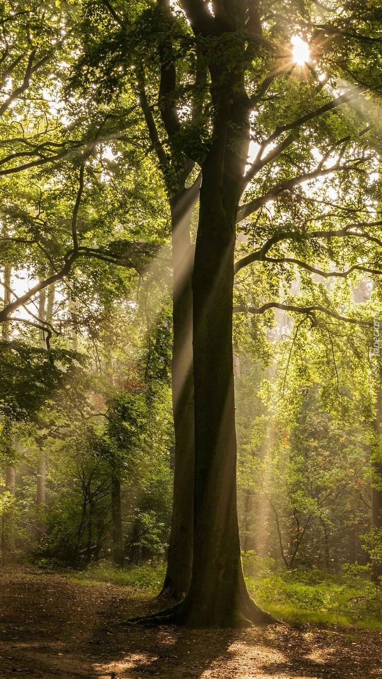 Słoneczne promienie w konarach drzewa