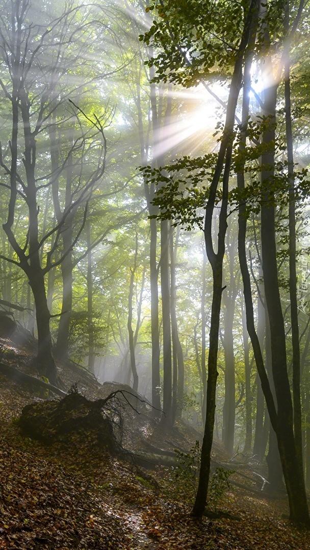 Słoneczne promienie w lesie