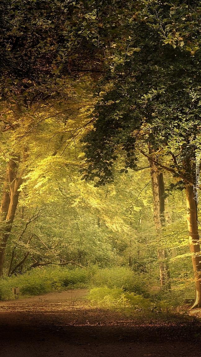 Słoneczne światło na leśnej drodze