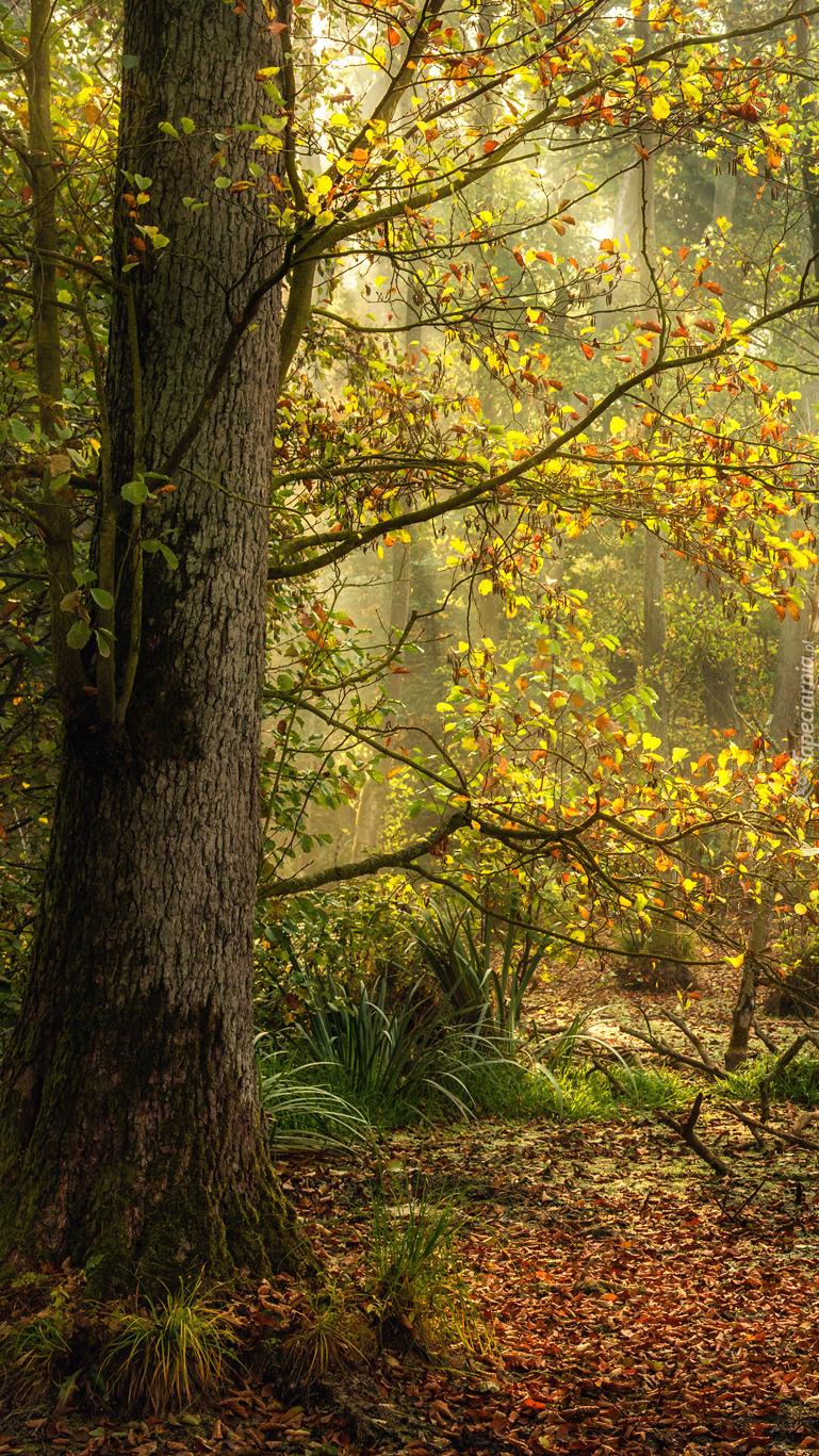 Słoneczne światło wśród gałęzi
