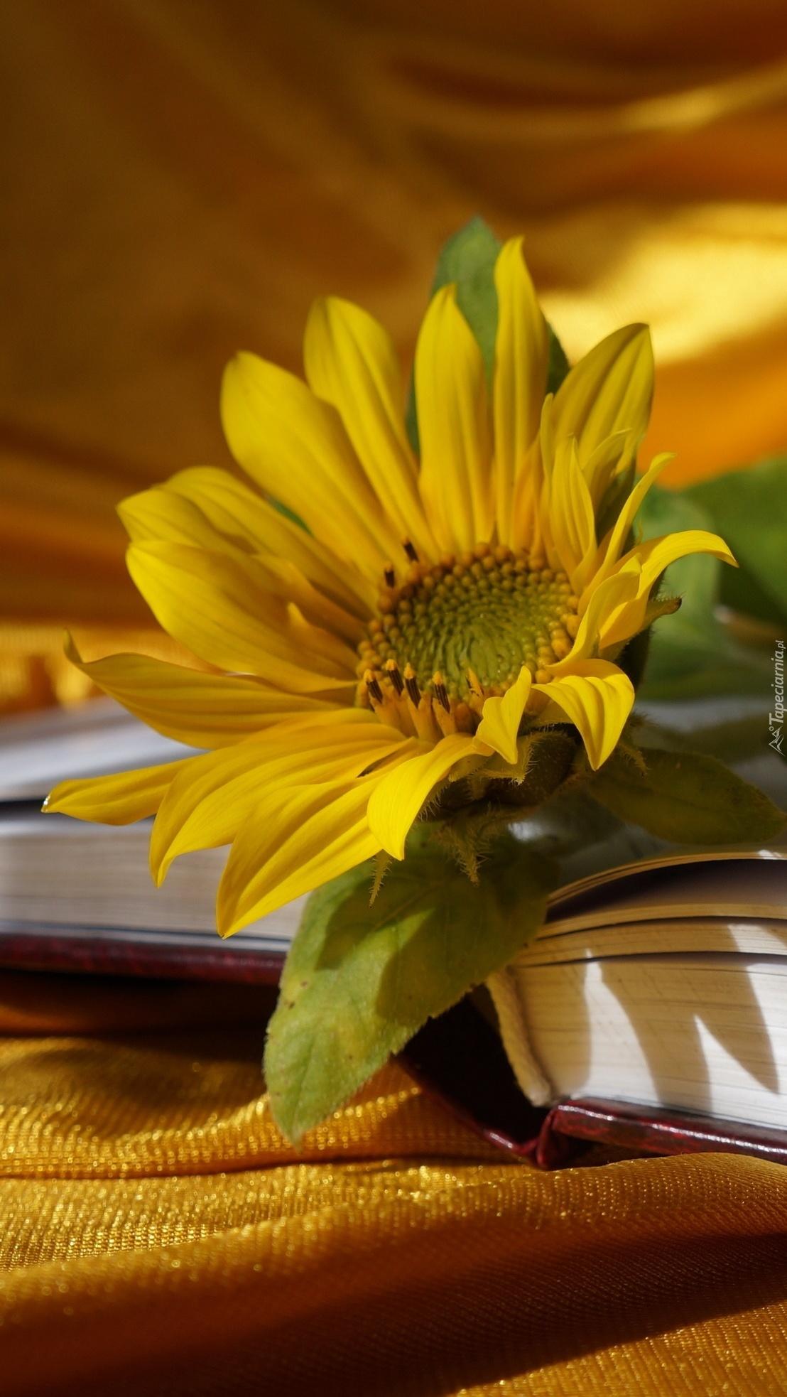 Słonecznik na książce