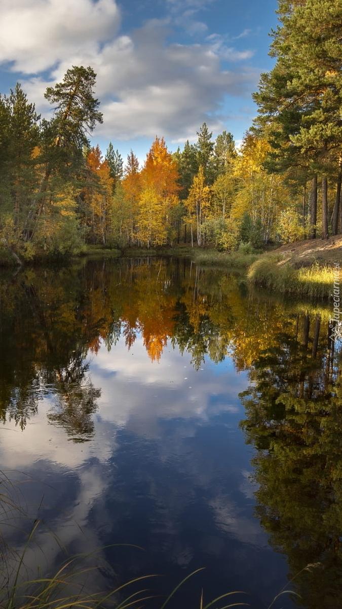 Słoneczny dzień nad rzeką w lesie