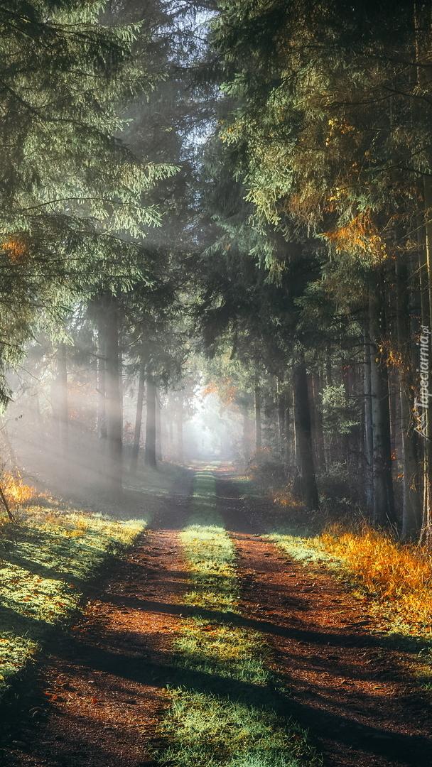 Słoneczny dzień w lesie