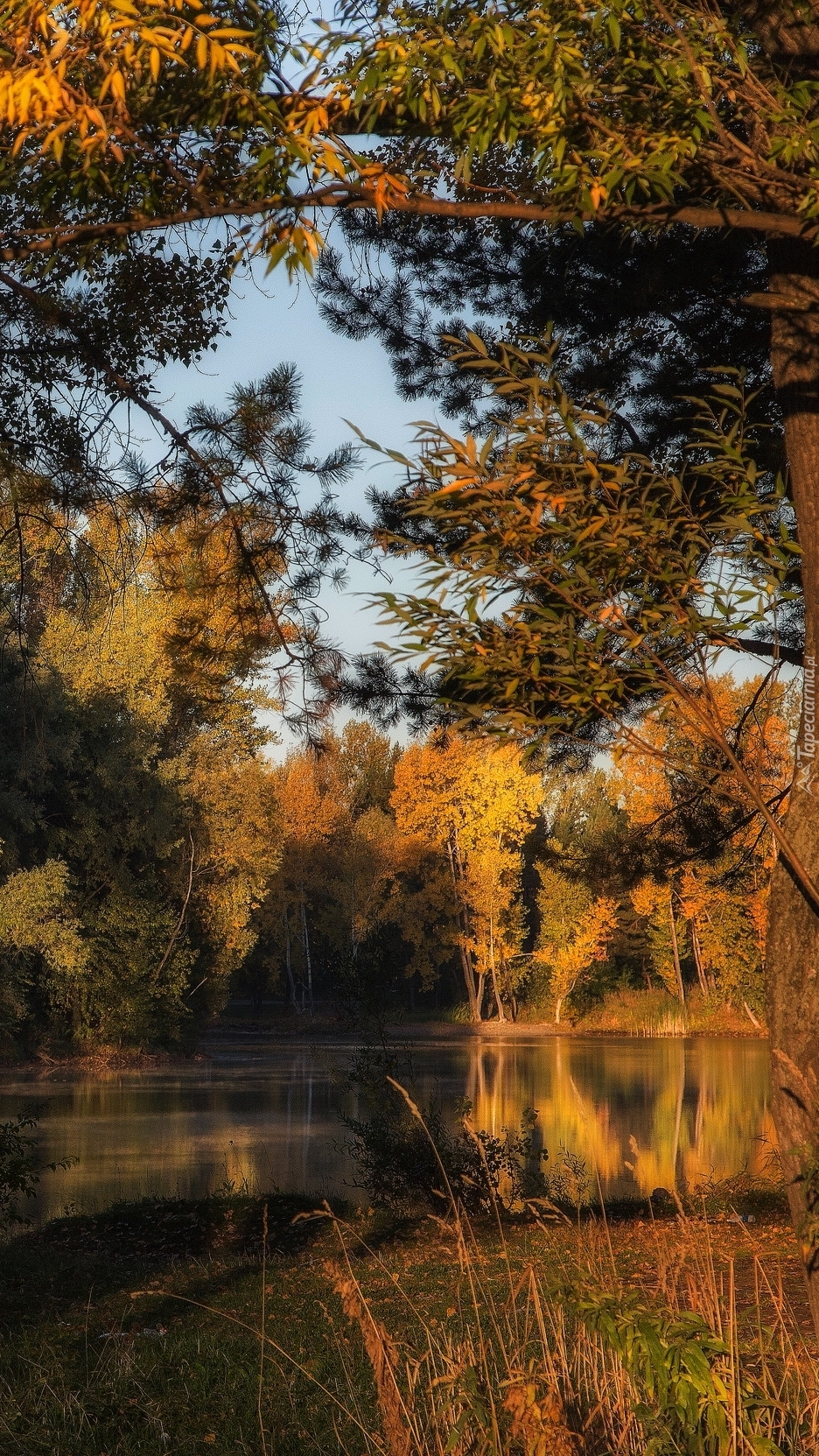 Słoneczny dzień w lesie nad jeziorem