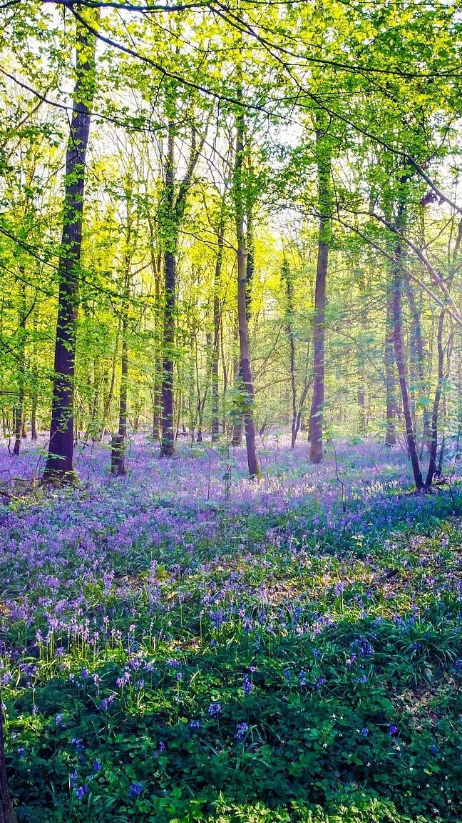 Słoneczny dzień w wiosennym lesie