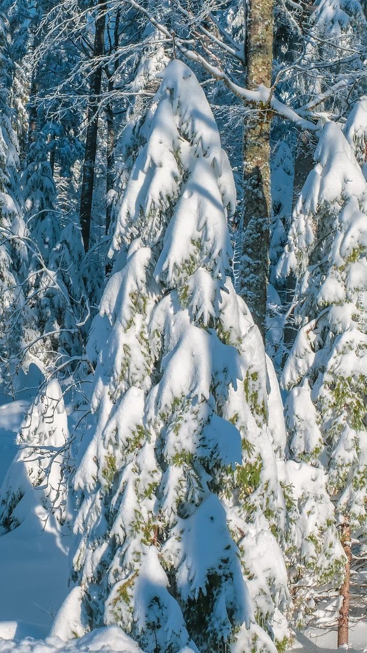 Słoneczny dzień w zimowym lesie