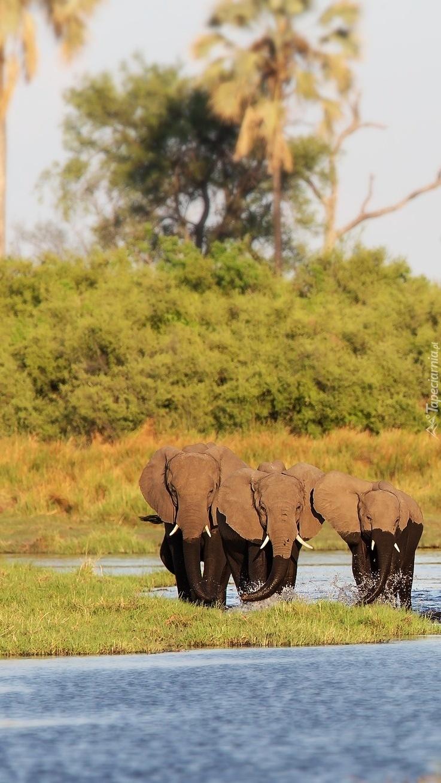 Słonie w wodzie