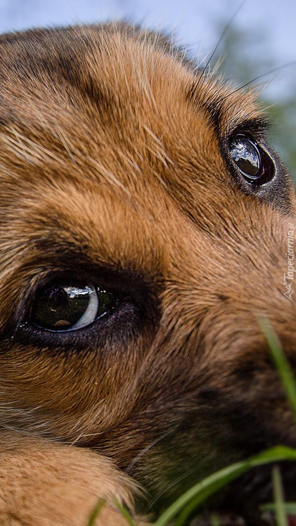Smutne oczy szczeniaczka
