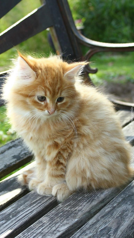 Smutny rudy kotek na drewnianej ławeczce
