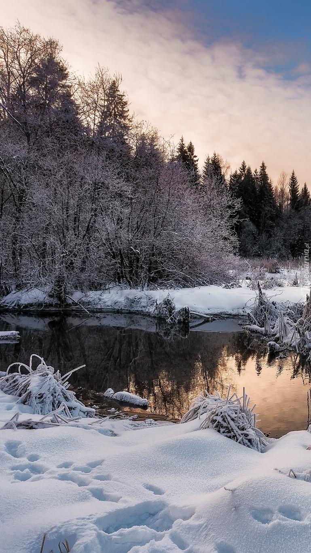Śnieg na brzegu rzeki
