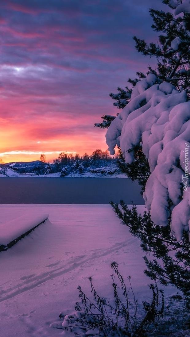 Śnieg na gałęziach drzewa