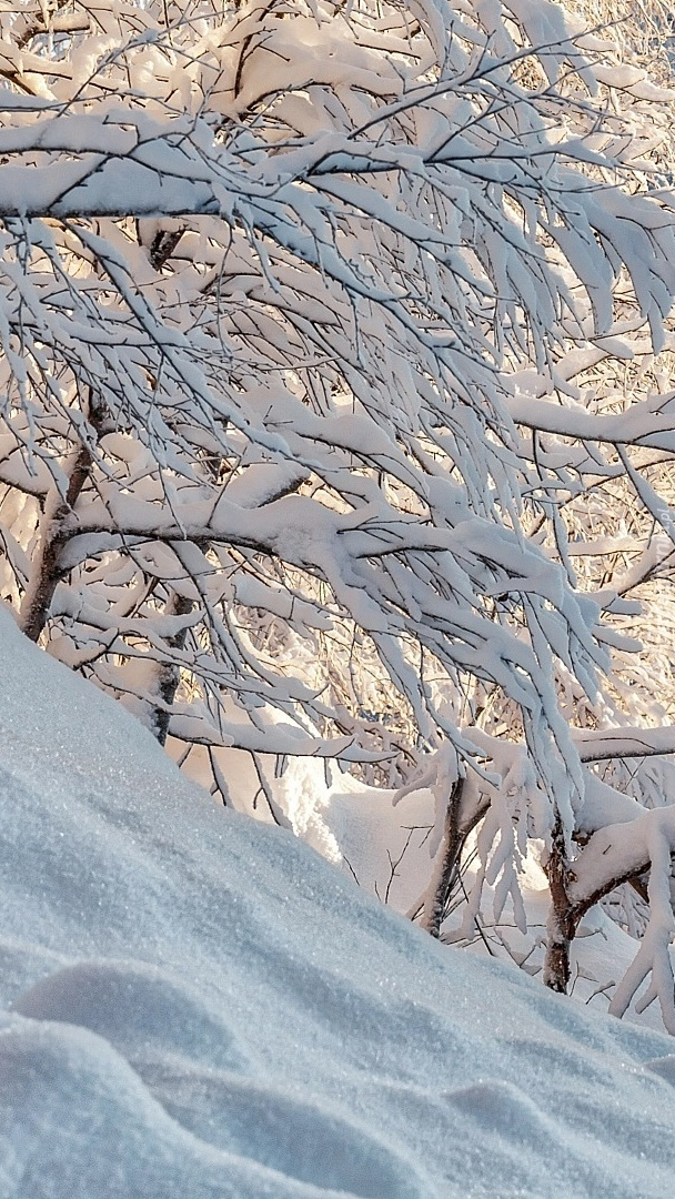 Śnieg na gałęziach