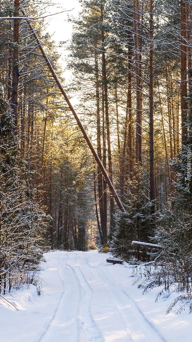 Śnieg na leśnej drodze
