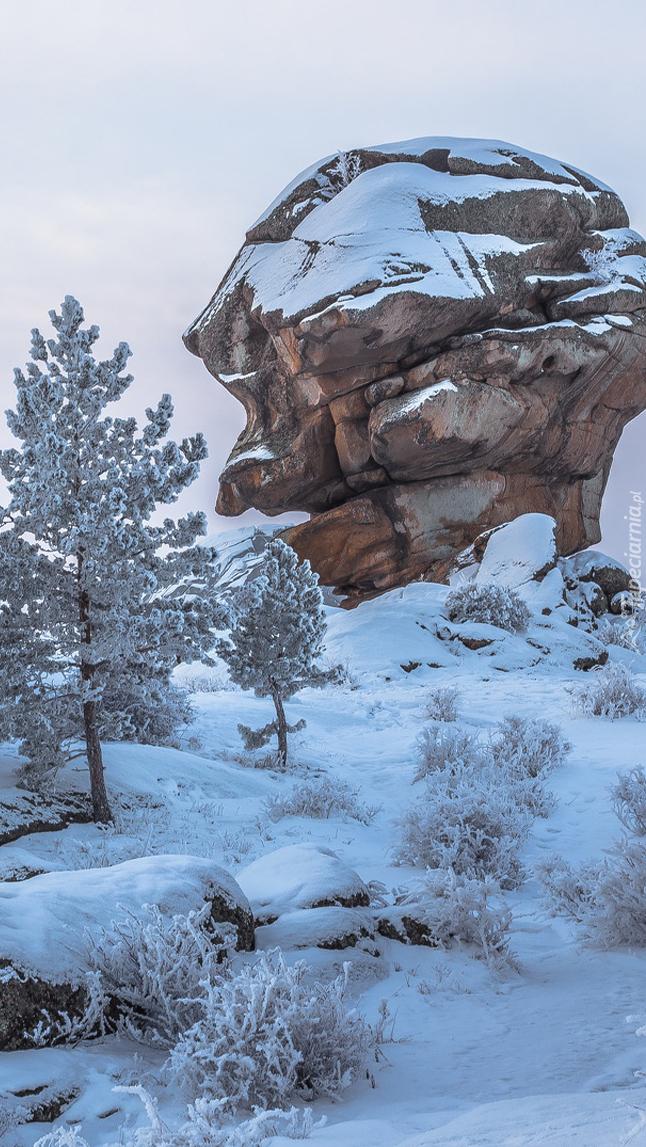 Śnieg na skale i drzewach