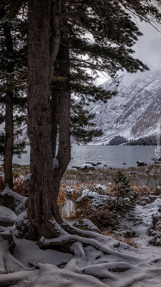 Śnieg pod drzewami nad jeziorem