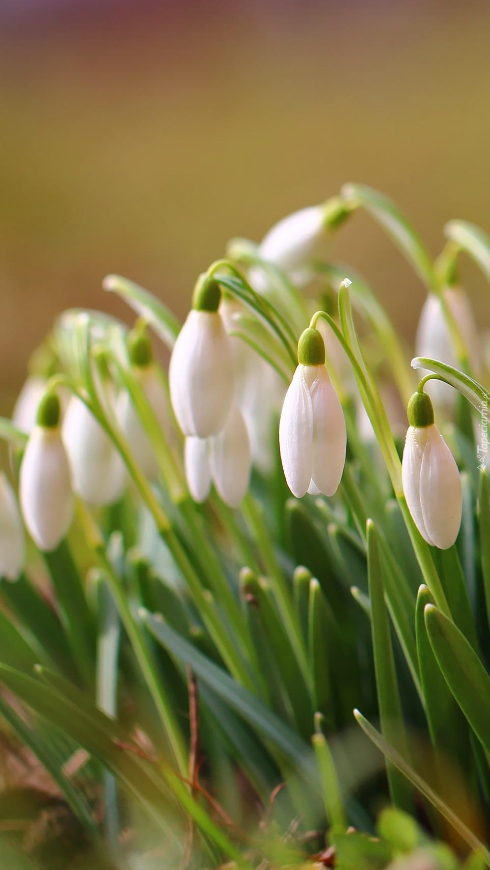 Śniegowe kwiatki