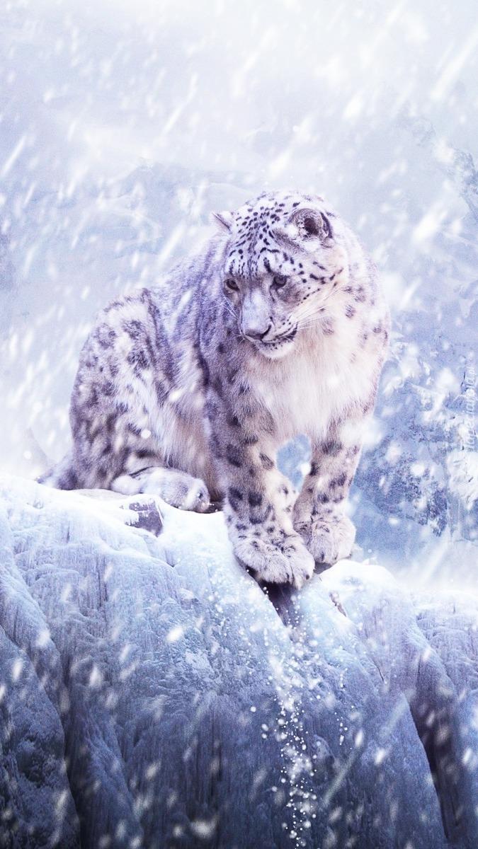 Śnieżna kicia