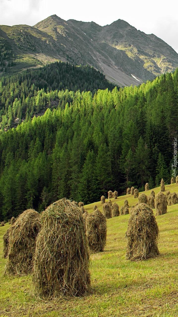 Snopki siana na łące pod lasem
