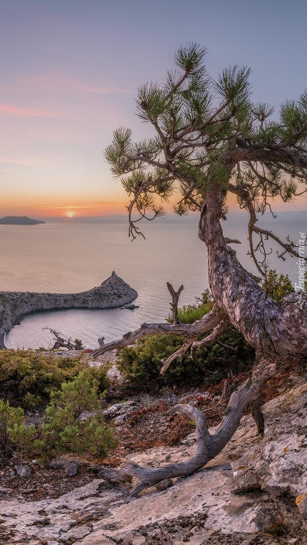 Sosna na skałach i widok na Morze Czarne