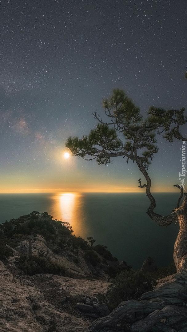 Sosna na skałach pod gwiaździstym niebem