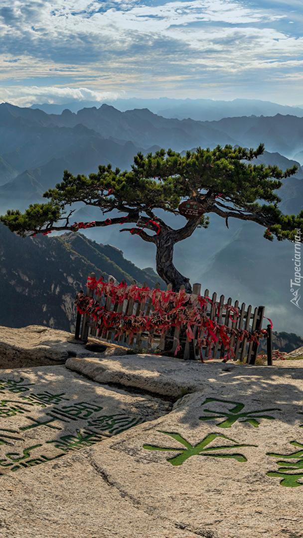 Sosna na skale i góry Mount Hua