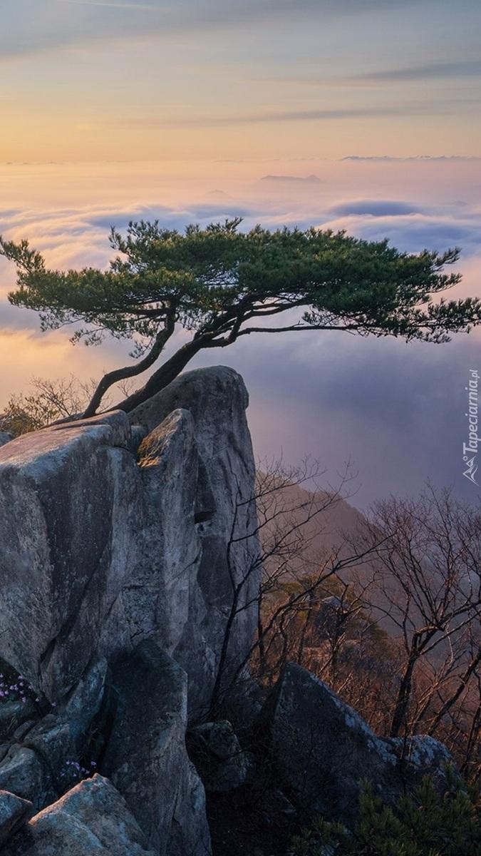 Sosna na skale i zamglone góry