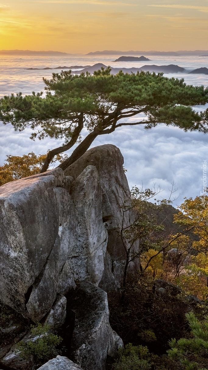 Sosny na skałach o wschodzie słońca