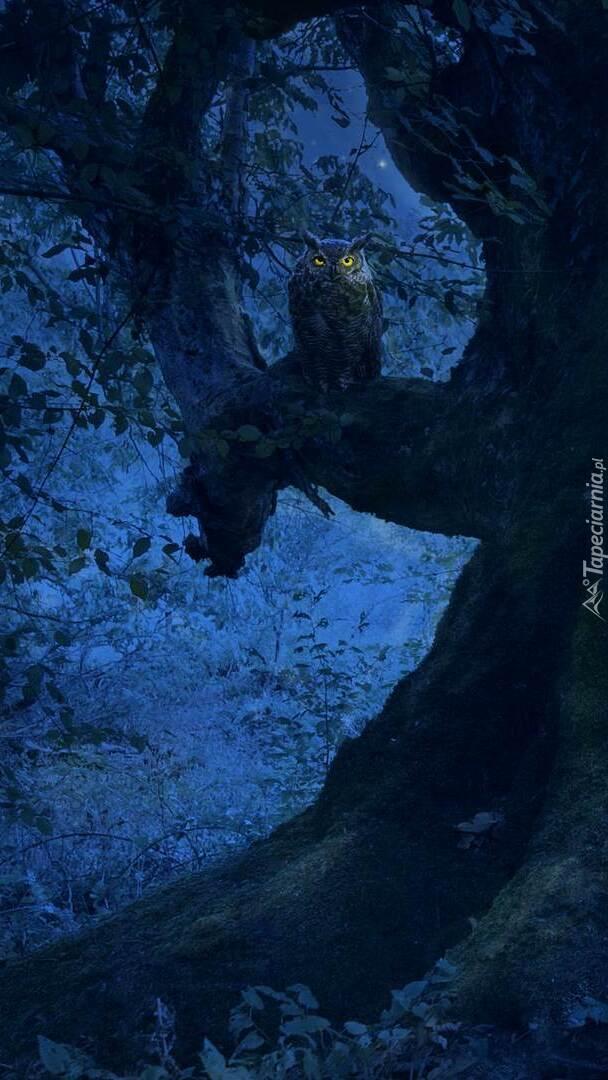 Sowa na gałęzi