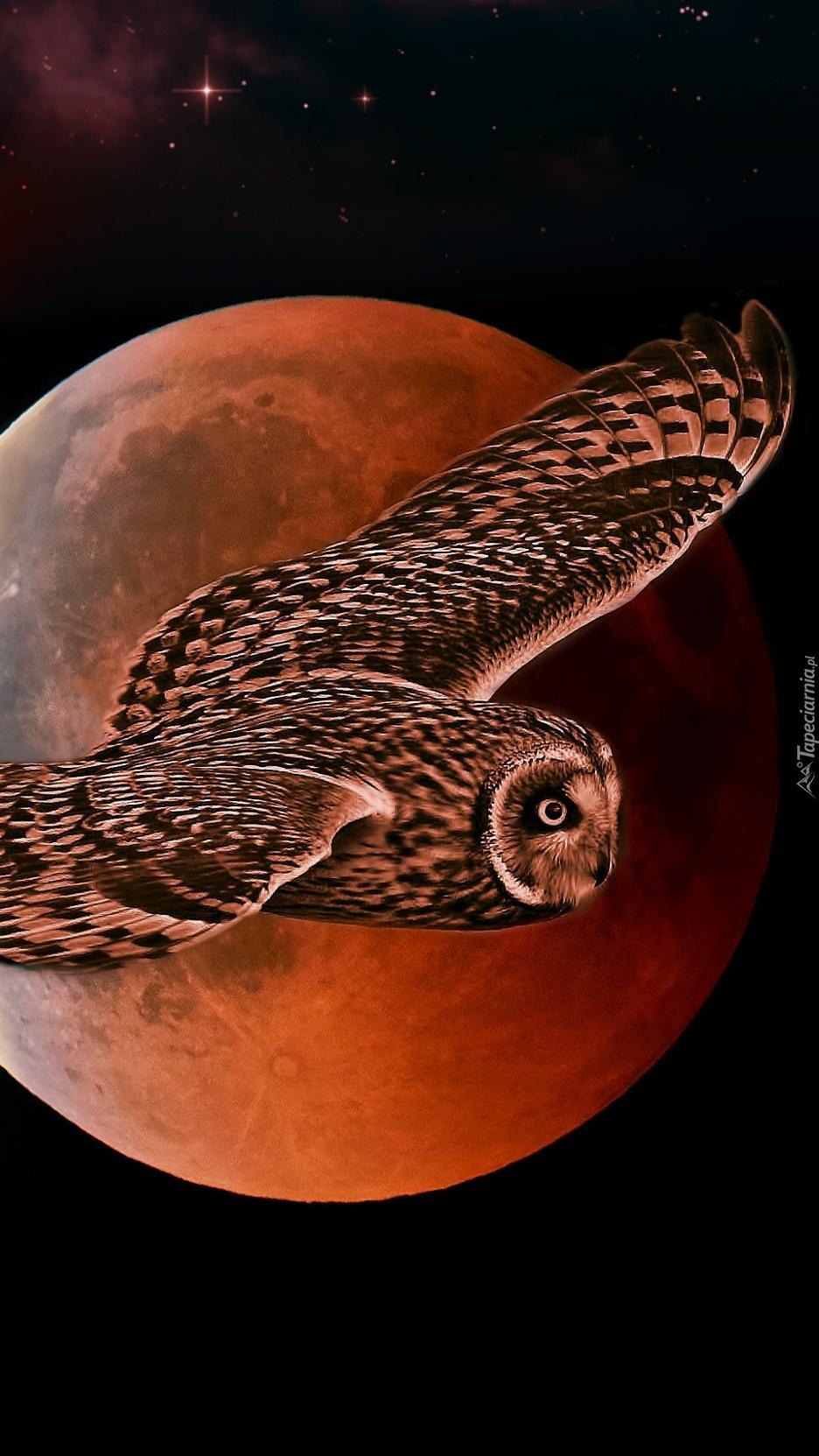 Sowa na tle księżyca