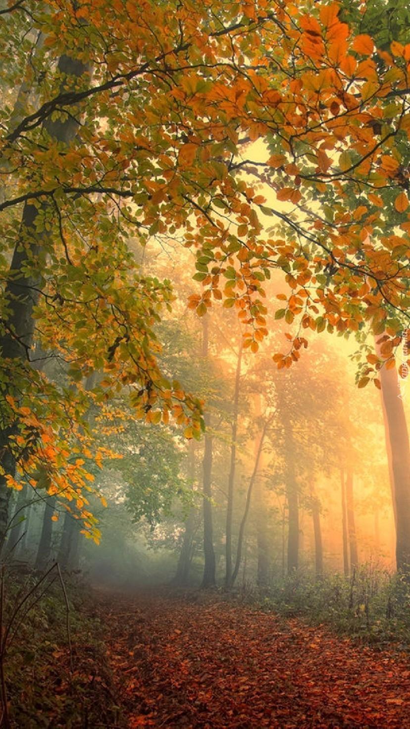 Spacer z jesienią