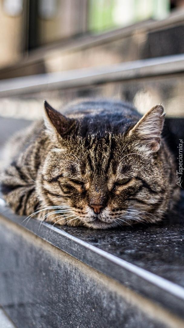 Śpiący kot na schodach