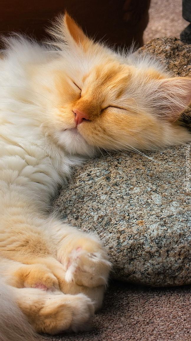 Śpiący na kamieniu rudy kot